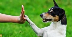 Как научить собаку основным командам: краткий экспресс-курс
