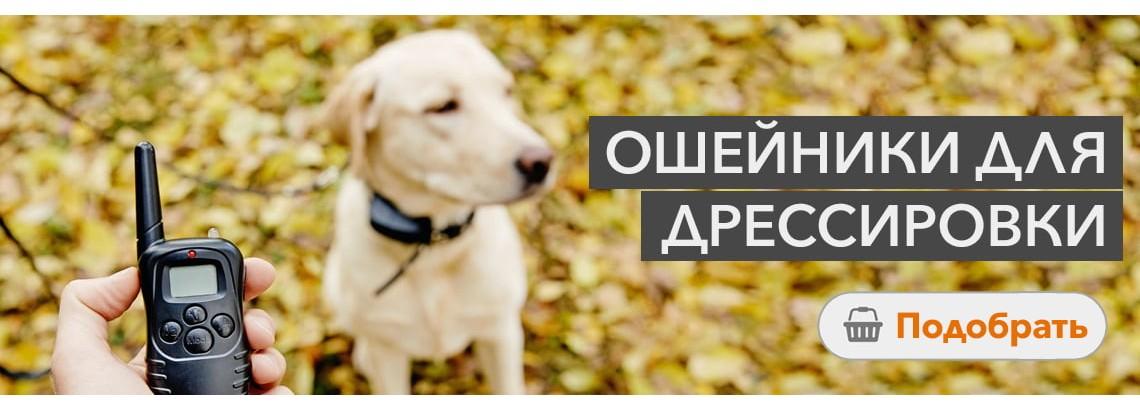 Ошейники для дрессировки собак