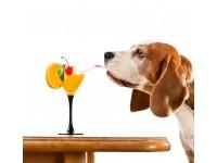 Почему собака много пьет воды и часто ходит в туалет?